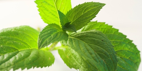 Mint's strong, fresh flavour and easy growing makes it as popular now as it ever has been. Photo / Thinkstock