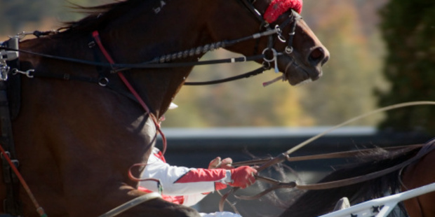 A jockey was thrown from her mount as riders tried to navigate their horses through the 14 cones left on the track. Photo / Thinkstock