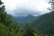 Cloud forest in north-west Ecuador. Photo / Supplied