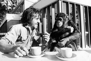 A former Auckland Zoo keeper remembers one his best mates, a chimpanzee called Sally. Photo / NZ Herald