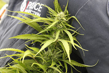 A Vietnamese refugee has been jailed for seven years for his role in a cannabis operation. Photo / File photo