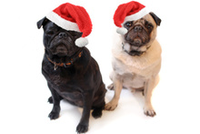 Do you dress your pups up for Christmas?Photo / Thinkstock
