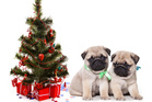 Puppies are cute, but they aren't just for Christmas.Photo / Thinkstock