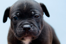 Anderson told inspectors one of the puppies had died soon after birth and two had been re-homed. Photo/Thinkstock