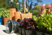 The garden centre chain has been opening a number of its stores on Good Friday, which breaches New Zealand's Easter trade law. Photo / Thinkstock