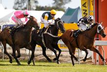 Shez Sinsational beats Diademe and Floria in the Cal Isuzu Stakes at Te Rapa on Saturday. Photo / Christine Cornege