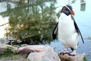 Katrina the penguin.
