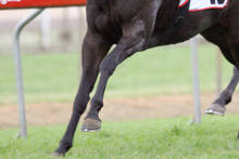 Pollock took over the sprinter's training after an unsuccessful winter campaign. Photo / Courier Mail