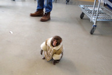 A small monkey wearing a winter coat and a diaper wanders around at an IKEA in Toronto. Photo / AP