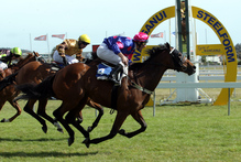Cassini (right) is a danger in the $70,000 Manawatu Cup today. Photo / APN