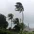 Coconut trees bow to approaching winds of Cyclone Evan against the backdrop of the LDS Temple in Suva, Fiji. Photo / Liti Aditora