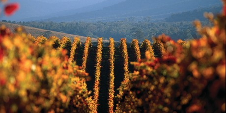 The vineyards of the Yarra. Photo / Supplied