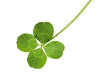 In politics, luck - and timing - are everything. Photo / Thinkstock