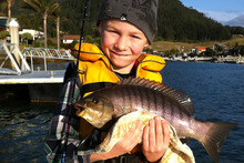 Harry Evans, 8, and a parore caught then released off Pauanui wharf. Photo / Supplied