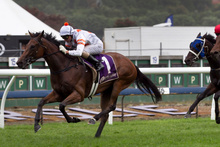 Vinny Colgan drives Fix to the line to win the Cambridge Stud Classic at Ellerslie yesterday. Photo / Natalie Slade