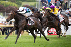 Habibi takes a step up by winning the Great Northern Guineas at Ellerslie yesterday. Photo / Natalie Slade
