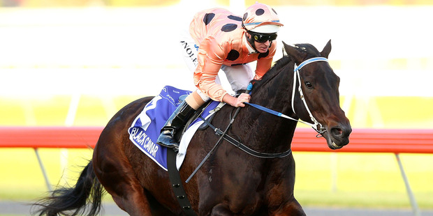 Black Caviar gave Australian racegoers plenty to cheer about, certainly much more than they enjoyed in the past spring with the Damien Oliver betting scandal. Photo / Getty Images