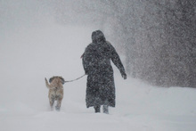 A woman walks her dog along a country road near Montreal during the first major snowstorm of winter in the region. Photo / AP