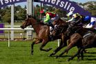 Mosse, pictured brilliantly winning the Concorde at Ellerslie this month, is in danger of missing the Railway Stakes. Photo / Steven McNicholl