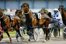 Four Starzzz Flash (No 5) is a top prospect for the feature event at Ashburton today. Photo / Greg Bowker