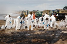 Volunteers cleanig up Papamoa Beach after the oil spilled from Rena. Photo / Christine Cornege