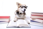 Apparently, you CAN teach an old dog new tricks. Photo / Thinkstock