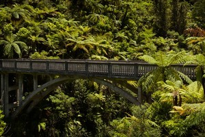 Whanganui National Park. Photo / Greg Bowker