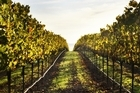 John Hawkesby takes his hat off to those souls who've taken the path to owning their own vineyard. Photo / Thinkstock
