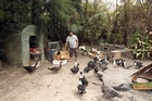 Bimal Lal and his Moscovy ducks. Photo / Janna Dixon
