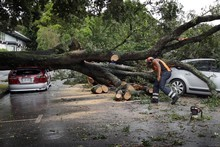 The tree landed on at least four cars, damaging them badly. Picture / Sarah Ivey