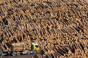 There's enoormous earning potential in adding value to raw product such as these logs being shipped out of Gisborne. Photo / Alan Gibson