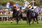 Knight's Tour, (outer) pictured winning the Northern Guineas, has had his Telecom Derby campaign curtailed after tearing a tendon. Photo / Sarah Ivey
