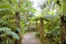 The Tumanako track in Hawkes Bay. Photo / APN