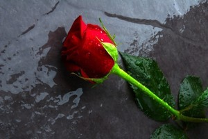 Valentine's Day 2012. Might be the perfect time to ask a stranger to share your umbrella. Photo / Thinkstock