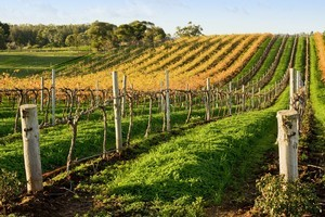 Stephen Bennett is pleased to see New Zealanders are not only appreciating their own wine, but, are becoming more familiar with styles from other countries. Photo / Thinkstock