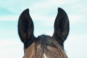 The trainer of the horse, Bruce Negus, confirmed an investigation was under way, and blamed himself for the death. Photo / Thinkstock