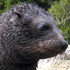 Baby seal at Abel Tasman National Park. Photo / Supplied