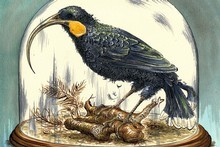 Is Kiwi music going the way of the huia on the path to extinction? Illustration / Anna Crichton