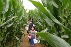 Young explorers Cory and Lani Luo in the Amaizing Maze 'n Maize.