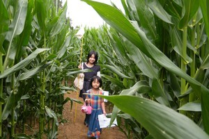 Young explorers Cory and Lani Luo in the Amaizing Maze 'n Maize. Photo / Supplied