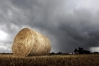 Good rain for many areas and high prices are sucking in billions in export earnings for New Zealand. Photo / APN