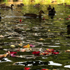 Petals float in the Avon River as part of a tribute to the earthquake victims. Photo / Hayden Donnell