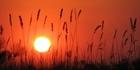 View: Okavango Delta, Botswana