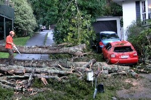 Trees in Birkdale caused serious damage. Photo / Ngaire Jermaine