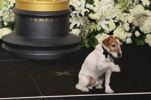 Uggie the dog, from the film 'The Artist' waves in the press room during the 84th Academy Awards. Photo / AP