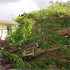A fallen tree in Henderson, Auckland, after the storm. Photo / Doug Sherring