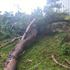 A branch snapped in the storm in Henderson, Auckland. Photo / Johnathan Weir
