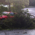 This tree in Birkenhead blocked three driveways and crushed an Audi. Photo / Denise Montgomery