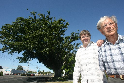 The historic Farley's Oak, which stands 24-metres high and has a canopy of 31m, is likely to be felled in autumn, but Allan and Jim Farley are not so sure its health warrants the decision.