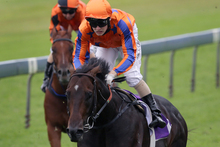 Burgundy will be hard to beat in the Railway Stakes at Ellerslie today. Photo / Sarah Ivey